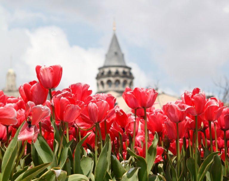 Названия цветов на турецком языке!