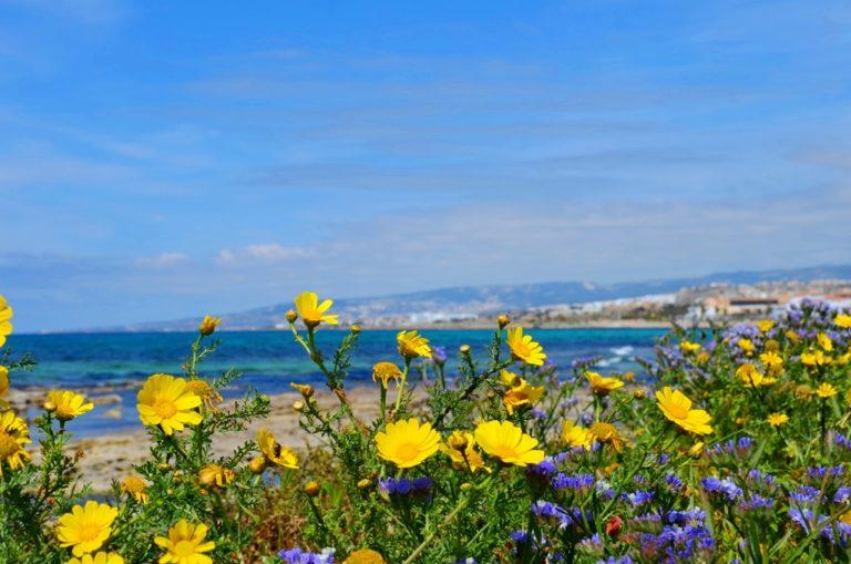 Флора Северного Кипра