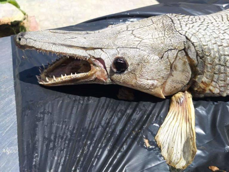 Обнаружено странное морское существо