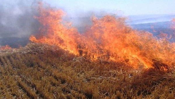 Почему возникли пожары в 2020 году на Северном Кипре?