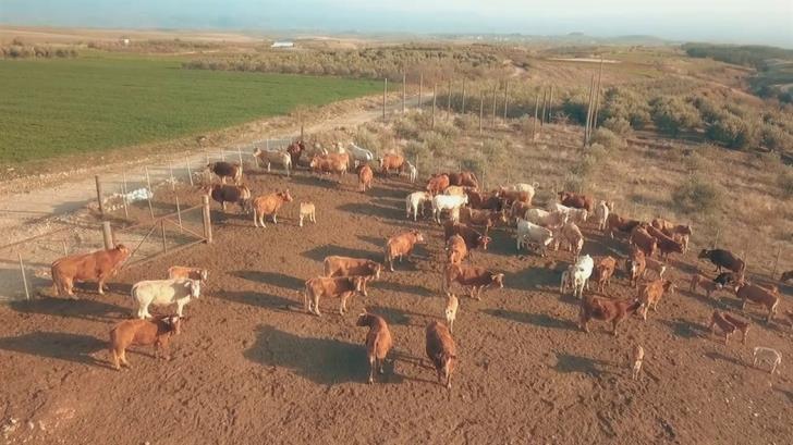 Отходы животноводства в ТРСК виноваты в загадочной вони в Никосии