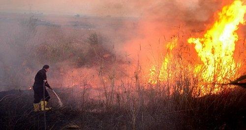 Неосторожное поведение граждан с огнем вызывает лесные пожары