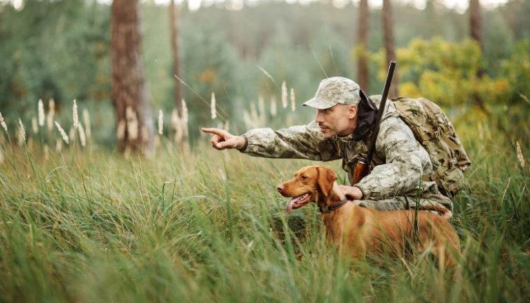 Сезон охоты начинается в воскресенье