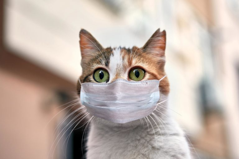Домашняя кошка заражена Covid-19