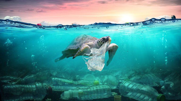 Черепахам грозит исчезновение из-за загрязнения морской среды